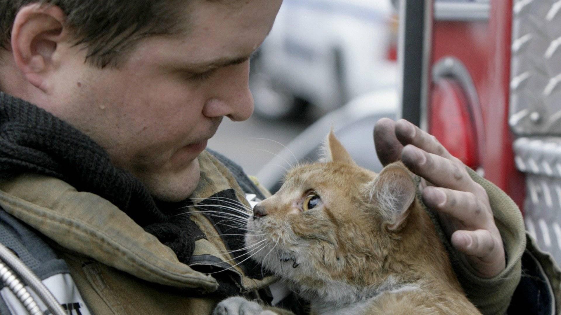 """""""хозяин, бросай всё и беги!"""" умная кошка спасла пятерых человек от катастрофы…"""