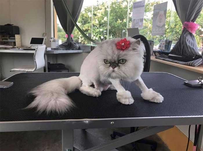 Можно ли кошек стричь? особенности ухода за кошками разных пород