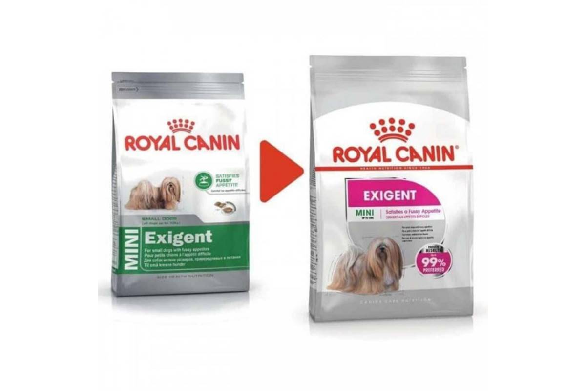 Кормление белых собак: об аллергии на корм с большим содержанием белка