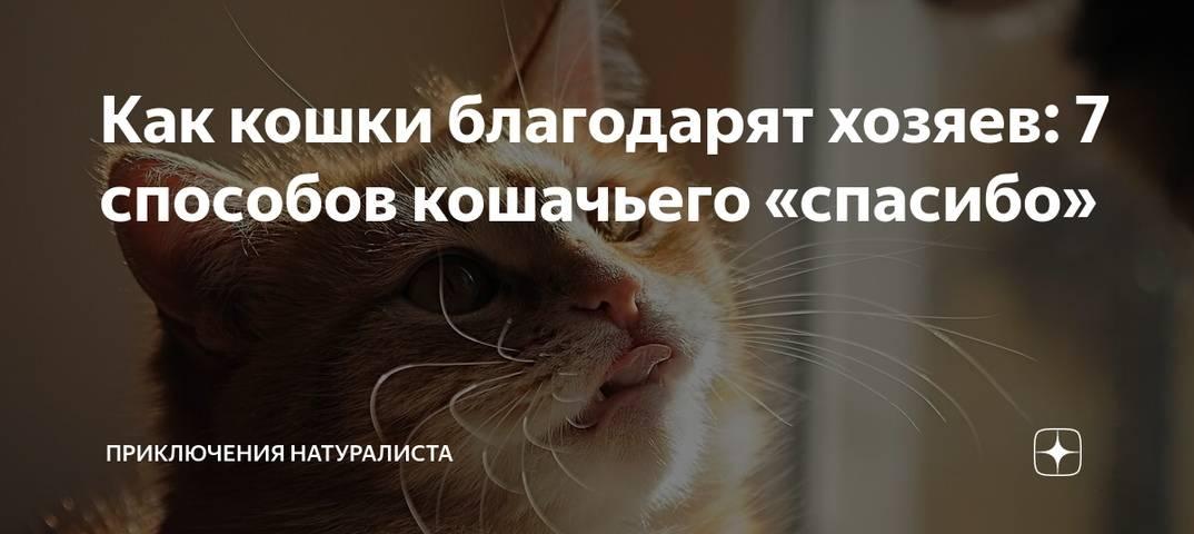 Как понять что кошка любит хозяина: мурчание, топтание