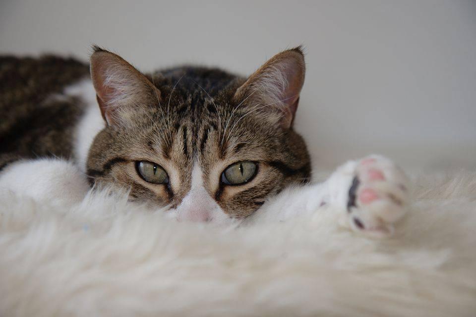 Кота тошнит белой пеной