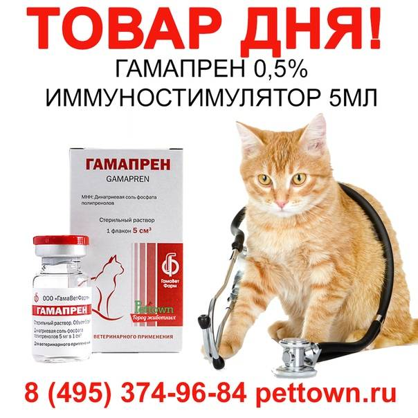 Эффективность гамапрена при лечении инфекционных заболеваний кошек