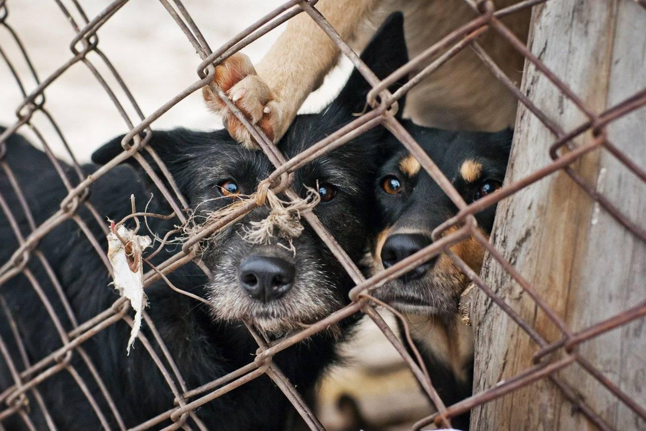 Рейтинг лучших приютов для животных: где собакам и кошкам хорошо? | милосердие.ru