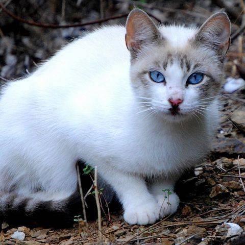 Охос азулес (ojos azules)