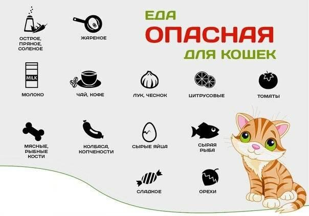 Как приучить котёнка к когтеточке