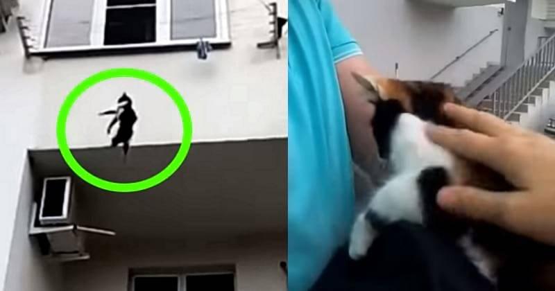 Кошачья ловушка. чемоткрытые навентиляцию окна опасны длядомашних питомцев. новости общества