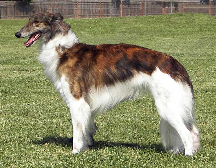 10 собак метисов о которых мало кто знает — статьи — rex24.ru: домашние животные, выбор, уход и воспитание, каталог компаний, эксперты.
