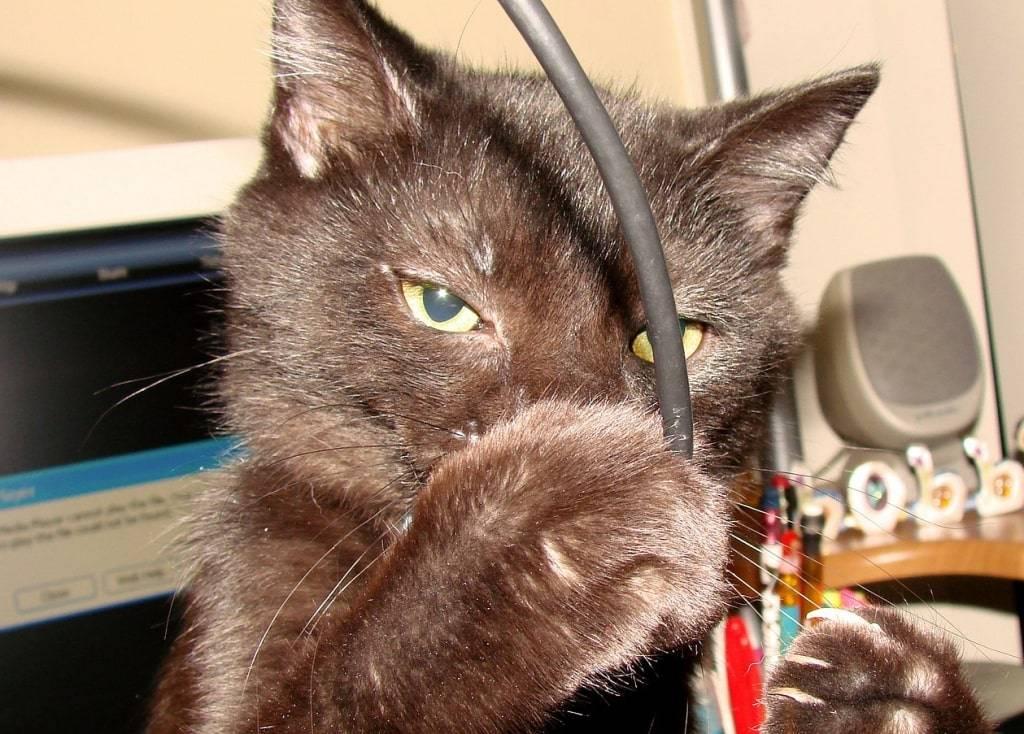 Что делать, если кот грызёт провода