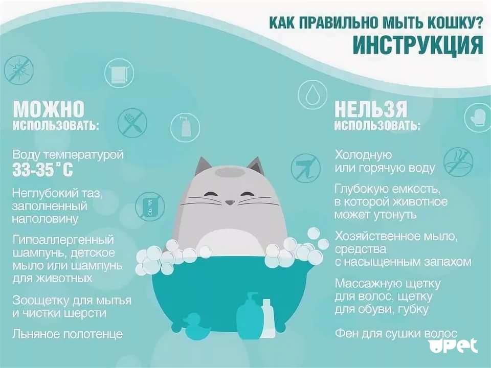 Купание кота: рекомендации для банных процедур