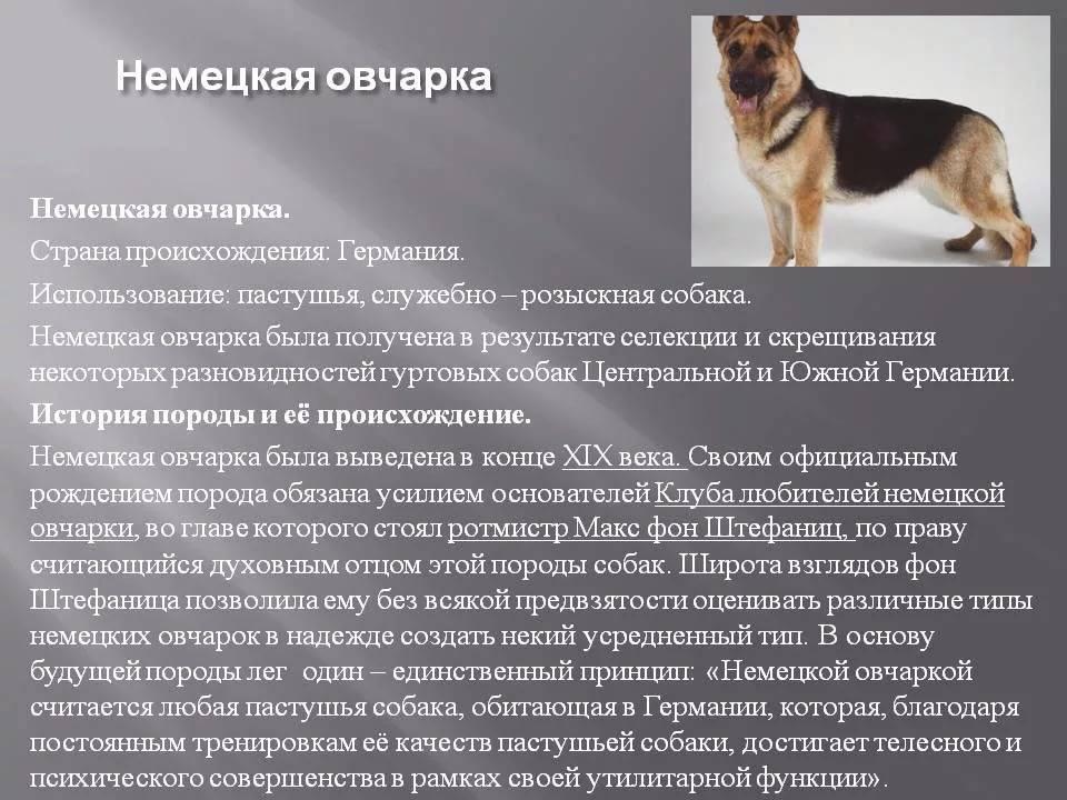 Плюшевый пес – бобтейл (староанглийская овчарка)