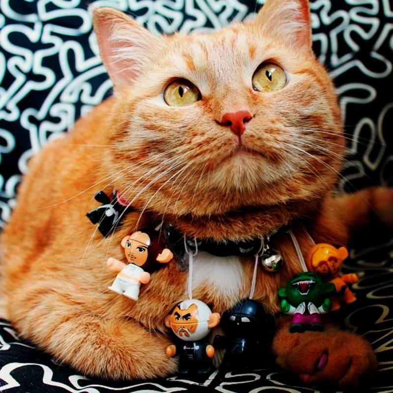 Бывают ли рыжие кошки?