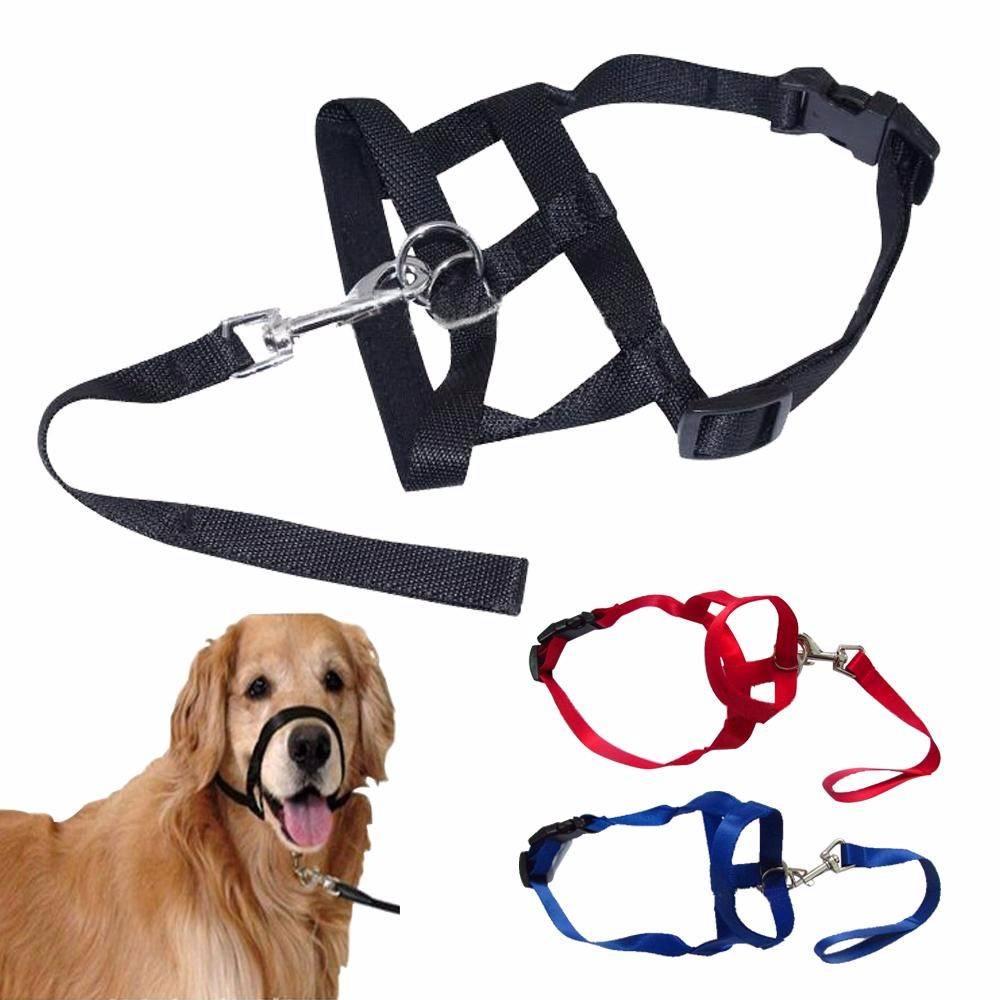 Нужен ли намордник для собак, как выбрать и правильно надеть, виды