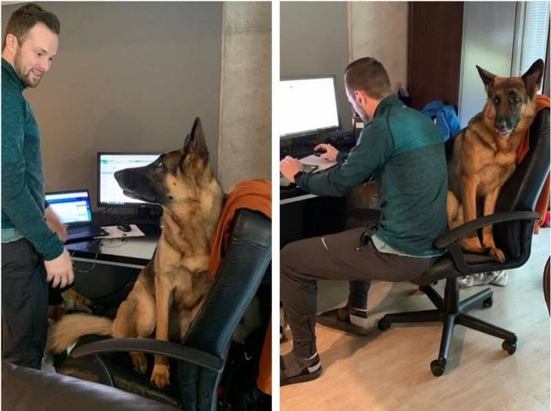 Зачем собакам нужен хозяин?