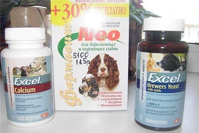 Витамины с кальцием для собак — обзор препаратов с инструкцией, дозировкой и ценой