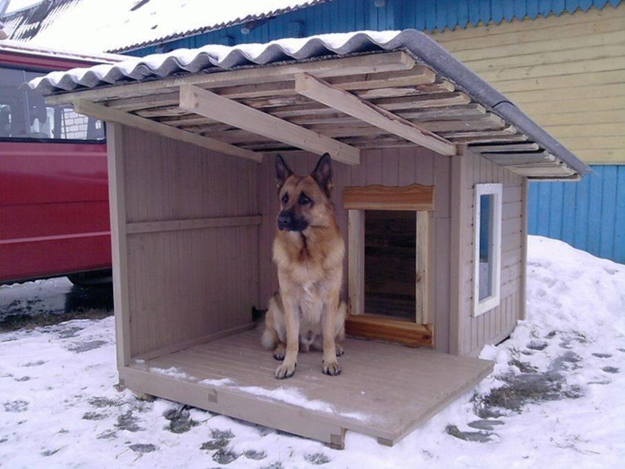 Как приучить собаку к будке?