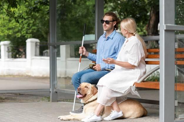 Собаки-компаньоны для пенсионеров с описаниями и ценами