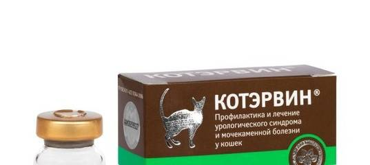 Котэрвин: лечение урологического синдрома и мочекаменной болезни у кошек