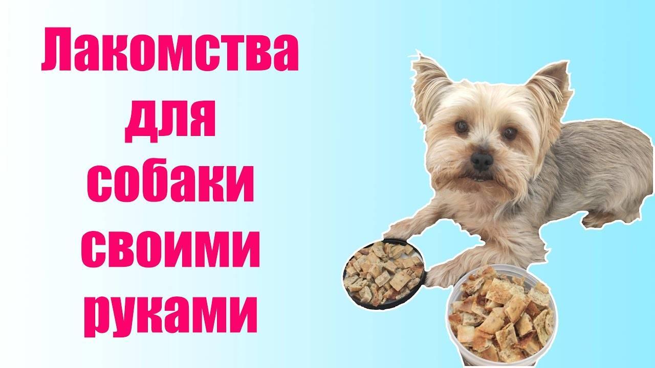 Лакомство для собак своими руками — 5 лучших идей