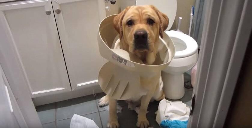 Почему собаки валяются на спине в падали и тухлятине