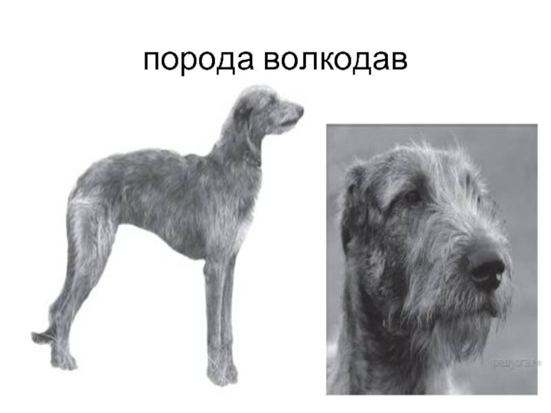 Охотничьи породы собак: идеальные помощники в погоне за добычей