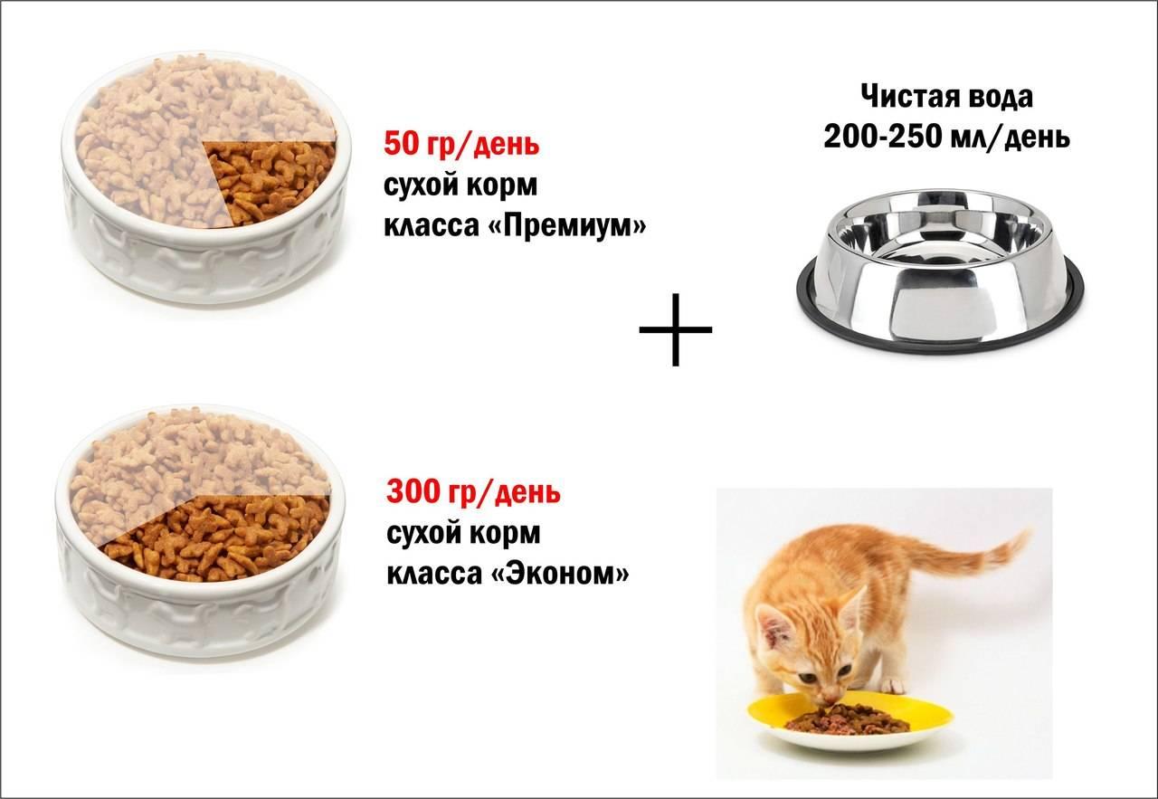 Питание кошек: натуральное, смешанное и готовые корма
