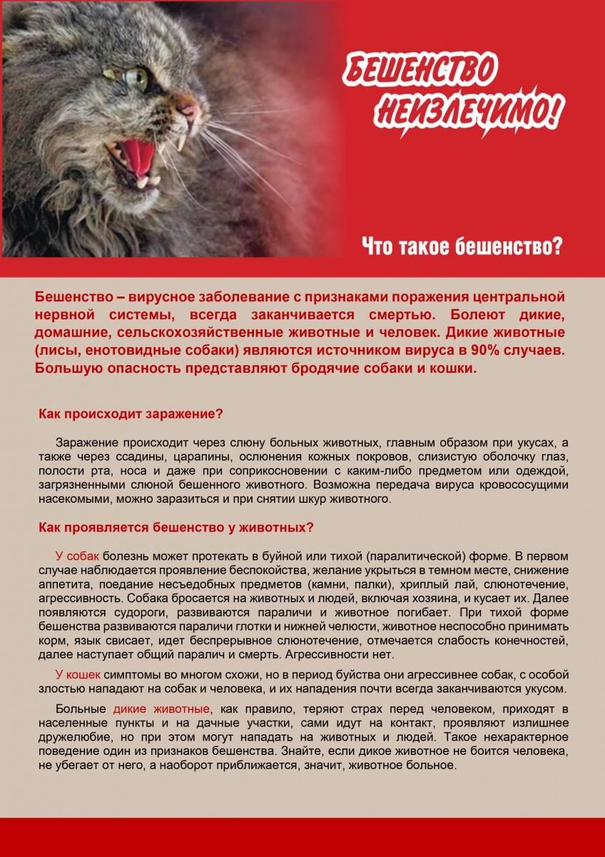 Бешенство у кошек:  симптомы и лечение, прогноз и вакцина