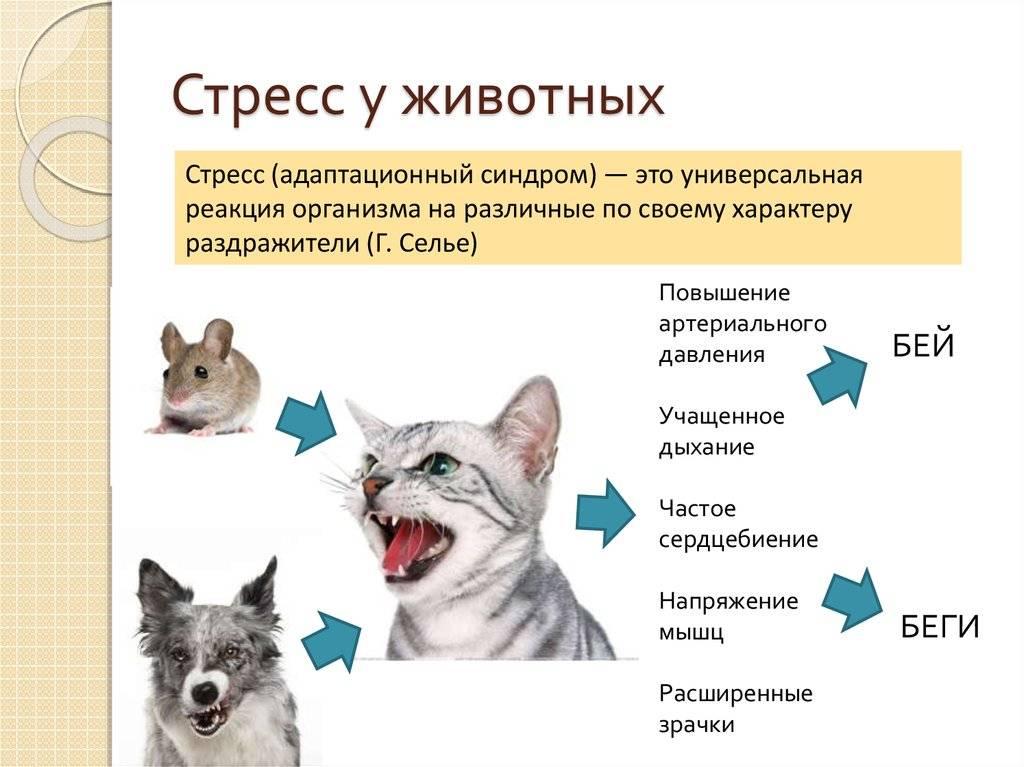 Агрессивный кот, основные причины и что делать?