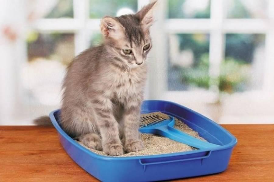 Как ухаживать за котенком: нормы и правила кормления, ухода за шерстью, зубами и глазами, первые прививки