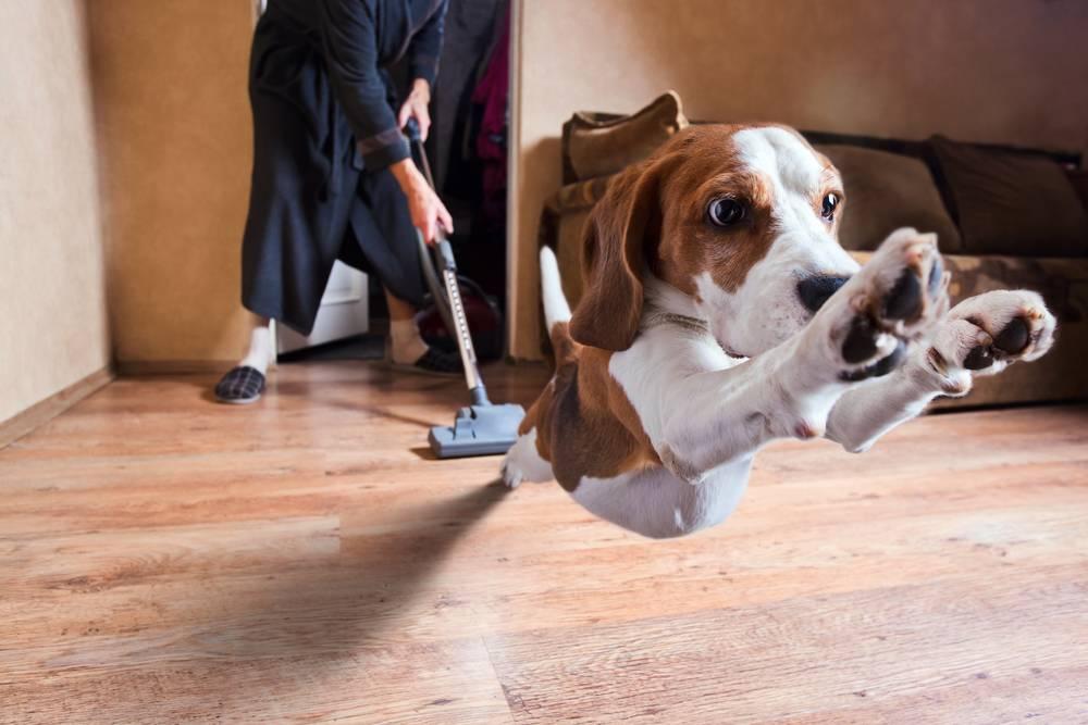 10 способов как отучить щенка и собаку метить углы в дома