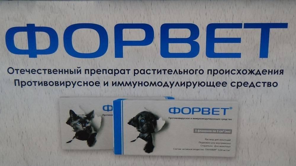 Форвет для собак: инструкция и показания к применению, отзывы, цена