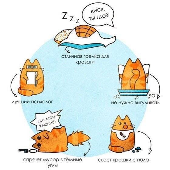 10 научно обоснованных причин завести кота   полезные советы на каждый день