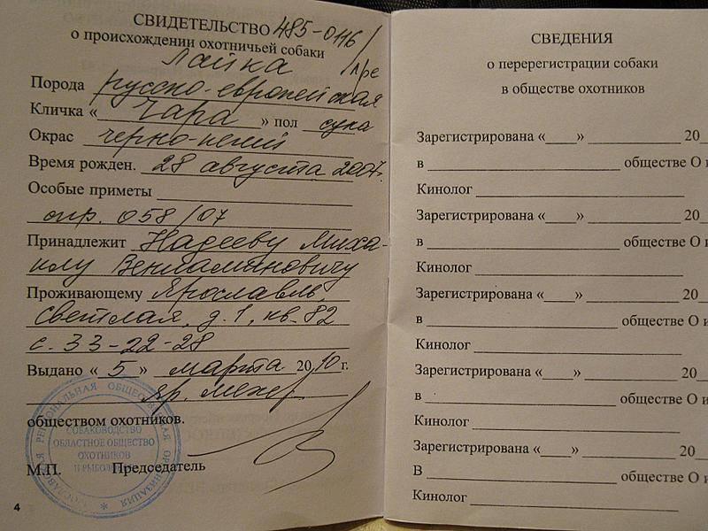 Русские клички для собак: простые красивые и старинные собачьи имена для мальчиков и девочек