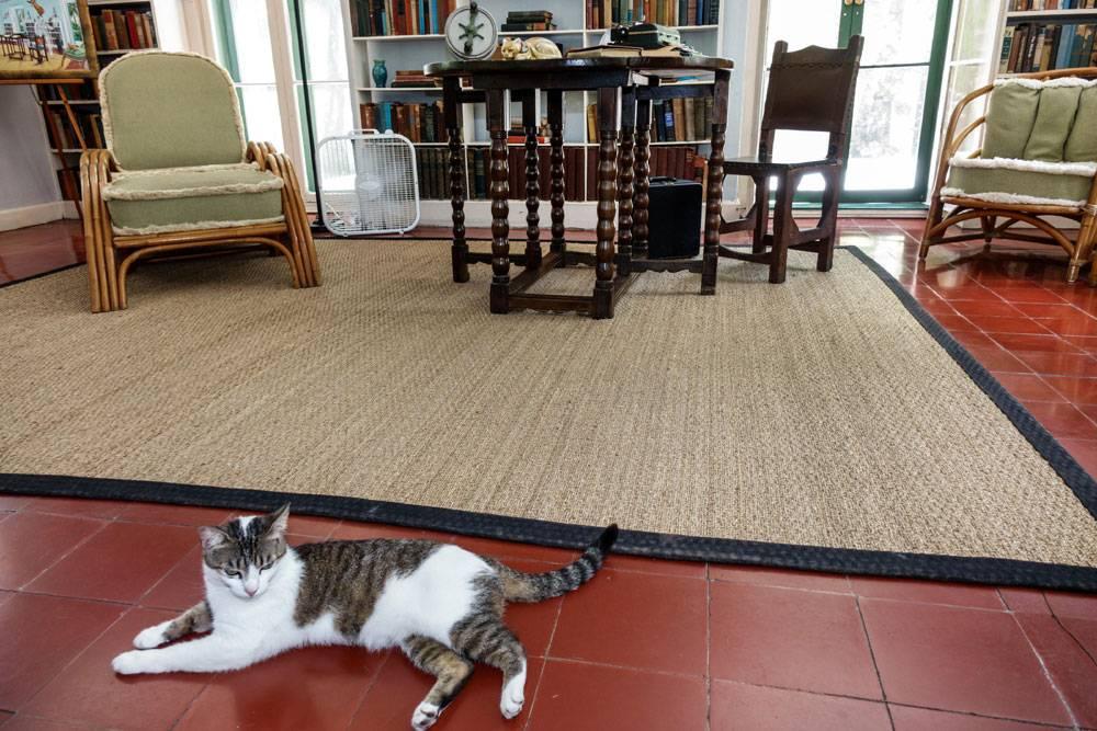 Кот или кошка: кого лучше завести в квартире