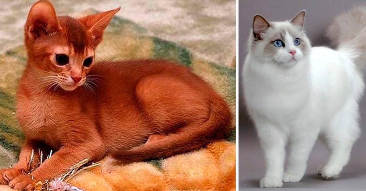Самые ласковые породы кошек – какого питомца лучше завести для ребенка в квартире