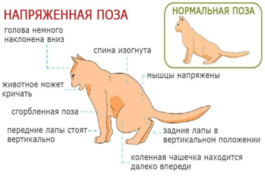 Узнаем как часто ходит в туалет котенок: физиологические потребности животного, норма, причины патологии