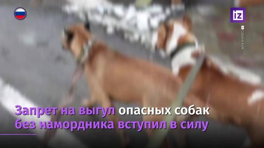 Какие собаки должны носить намордник по закону о выгуле питомцев