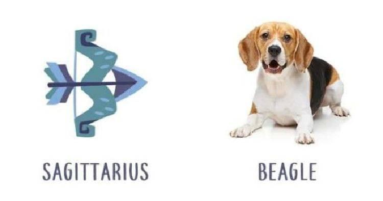 Какая порода собак подходит вашему знаку зодиака