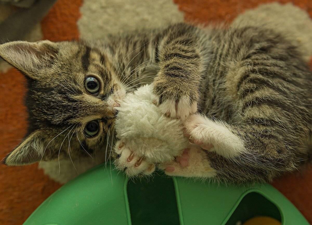 Как сохранить хорошие отношения с котом - лайфхакер