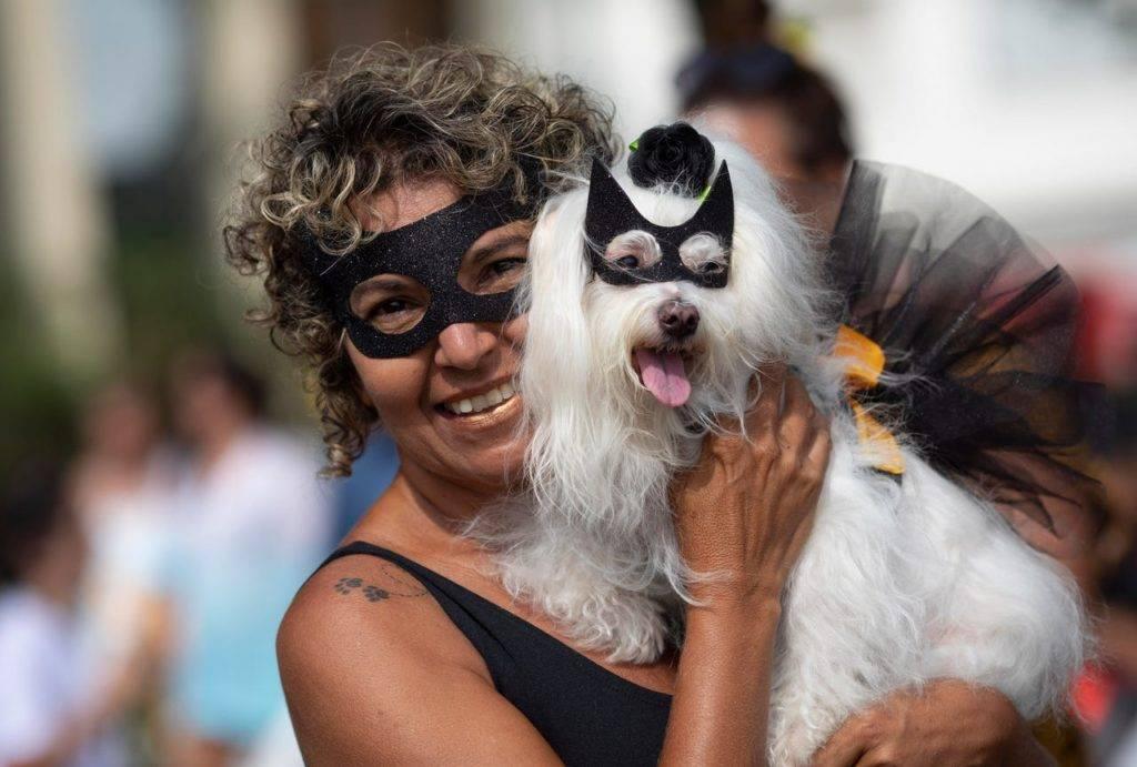 Весёлый карнавал для собак и их хозяев в рио-де-жанейро
