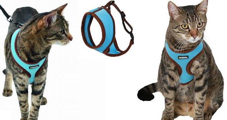 Какие бывают шлейки и как надеть их на кошек