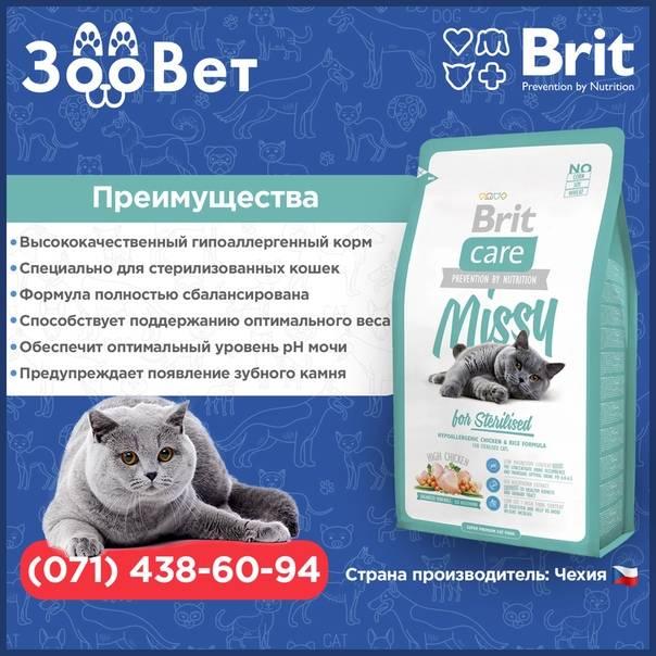 Кормление кошек при аллергии: натуральные продукты и сухие корма