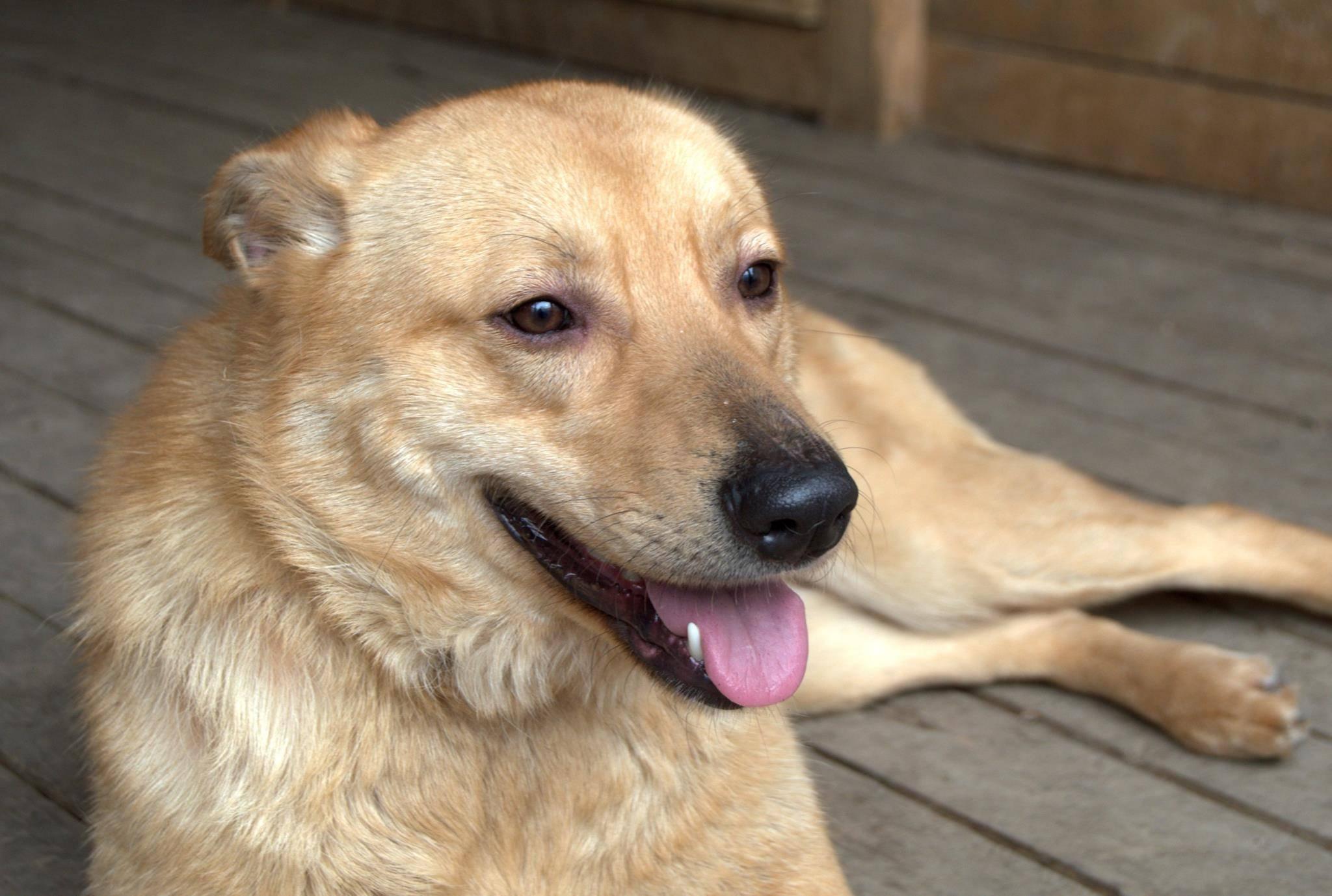10 прикольных собак метисов, о которых вряд ли когда-то слышали — 4 лапки
