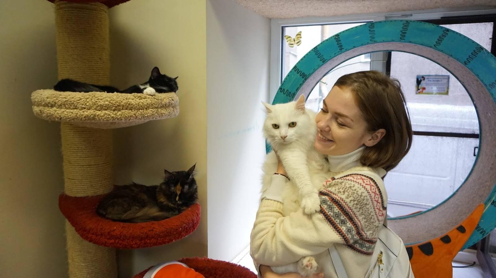 Котокафе - мода на кафе с кошками захватывает мир или топ-10 котокафе по всему миру – так удобно!  traveltu.ru