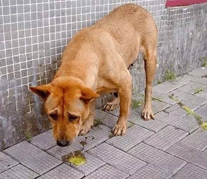 Собака не какает: что делать если не ходит в туалет уже сутки
