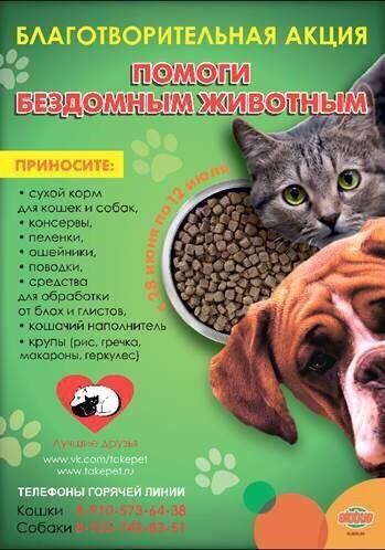 К какому виду относятся собаки | к какому классу животных