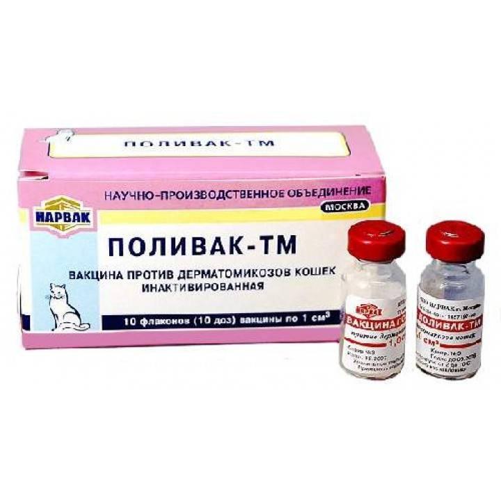 Инактивированная вакцина поливак-тм— надёжная защита кошки от кожных инфекций