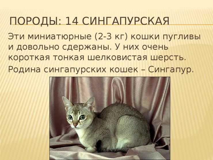 Котики с мышиными ушами: особенности разных пород