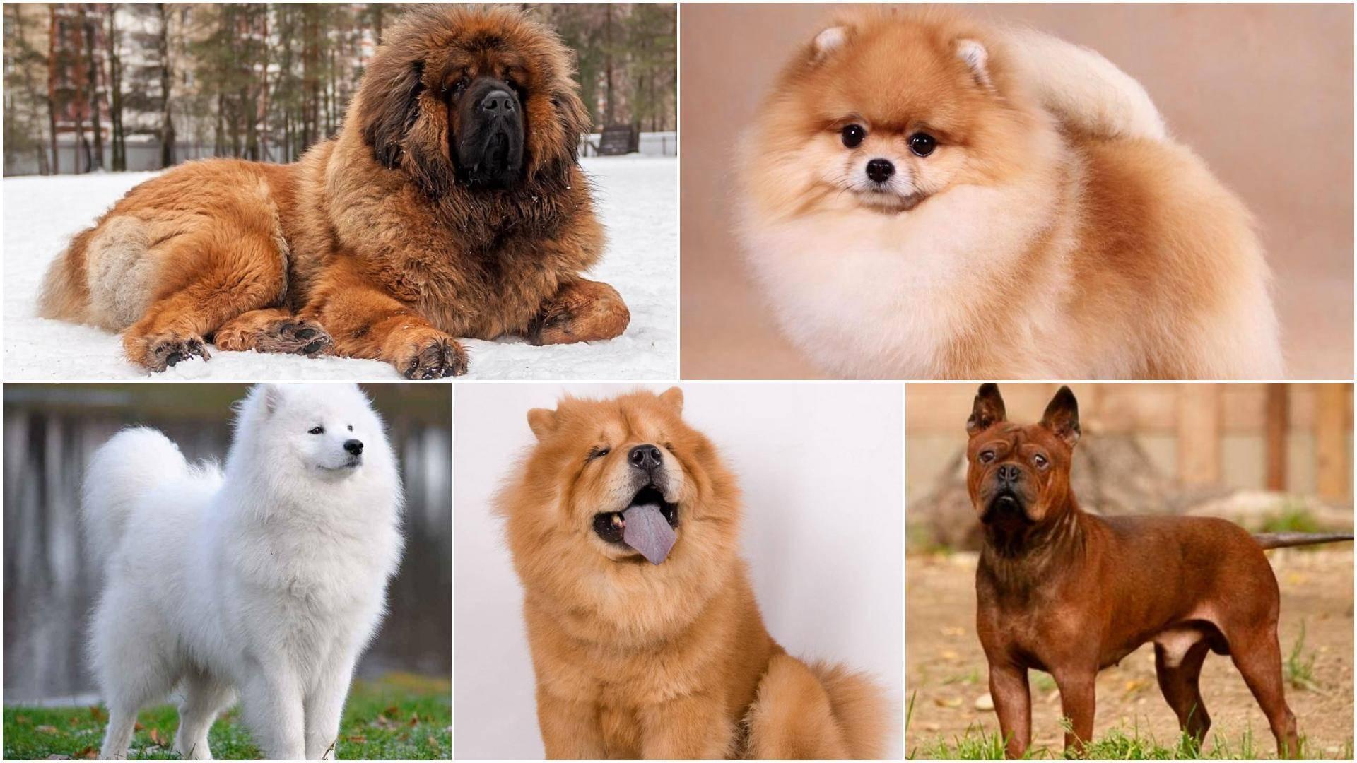 Самые популярные и недорогие породы собак для дома