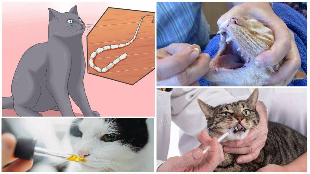 Виды паразитов у кошек