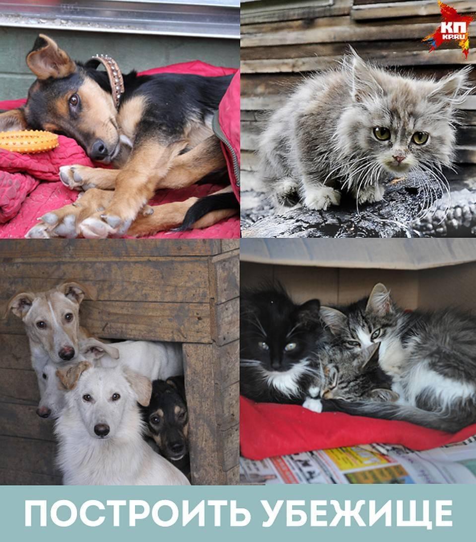Как приучить кошку к новому дому. советы от эксперта. новый дом и новые хозяева для кошки как долго кот привыкает к новому месту - лечение